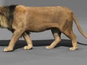 lioness lion rigging animation 3d model 3D Models Download Available