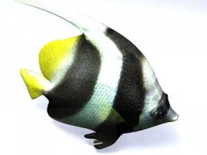 Poisson fish