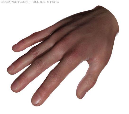 Real Hand SSS sctatter shade 3D Model in Anatomy 3DExport
