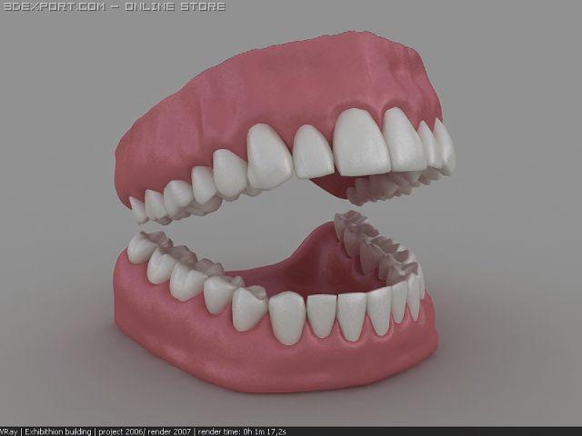 3d dentition 3D Model