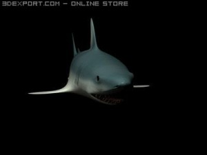 Shark Animated
