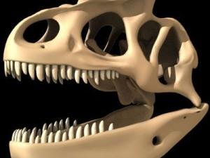 Allosaurus Dinosaur Skull