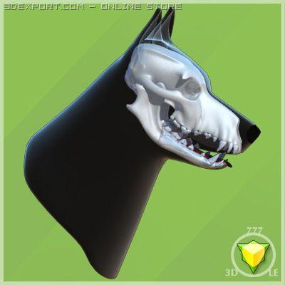 German Shepherd skull and head 3D Model
