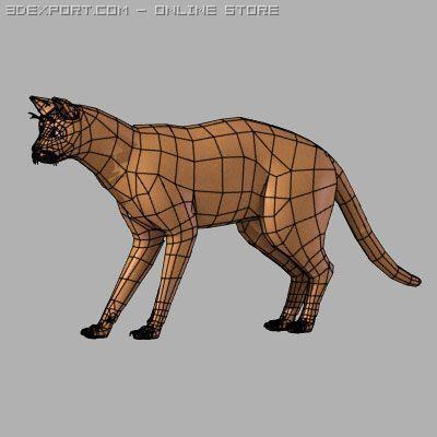 Cat anatomy 3D Model in Amphibians 3DExport