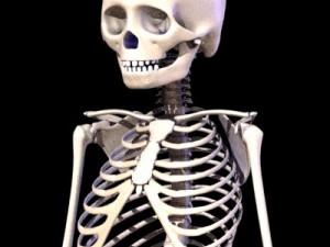 5 Year Old Child Skeleton