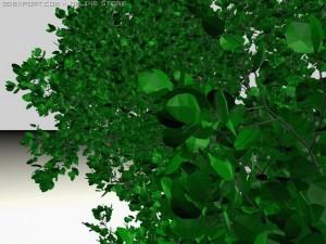 Tree Round Leaf