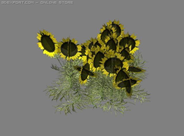 Sunflower Patch 3D Model