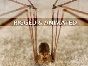 Spider Pholcus Phalangioides Rigged