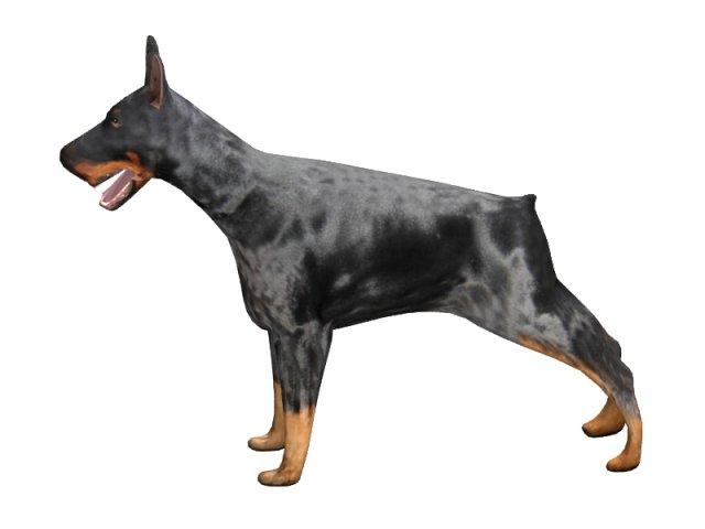 Doberman 3D Model