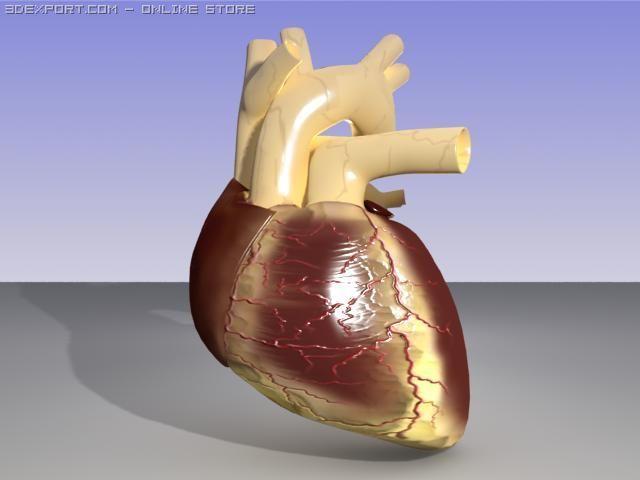 Heart 3D Model in Anatomy 3DExport
