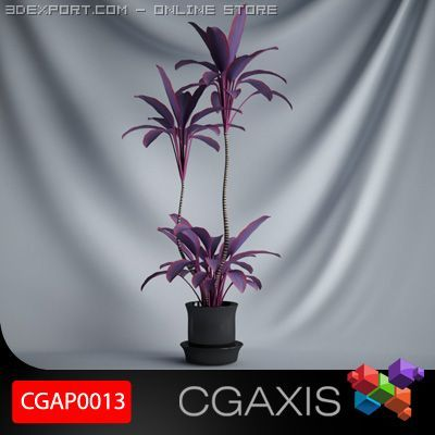CGAXIS plant 13 3D Model