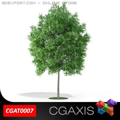 Tree Deciduous CGAXIS 07 3D Model