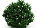 CGAxis Oakleaf hydrangea