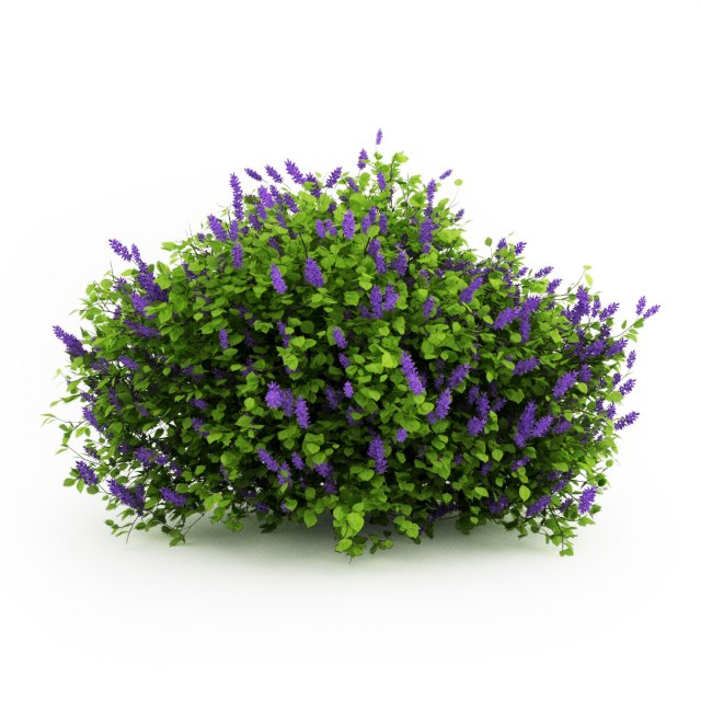 CGAxis Lilac 3D Model