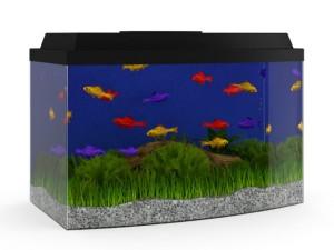Black Top Aquarium