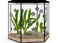 Hexagonal Aquarium