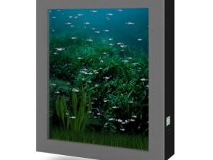 Wallmounted Aquarium