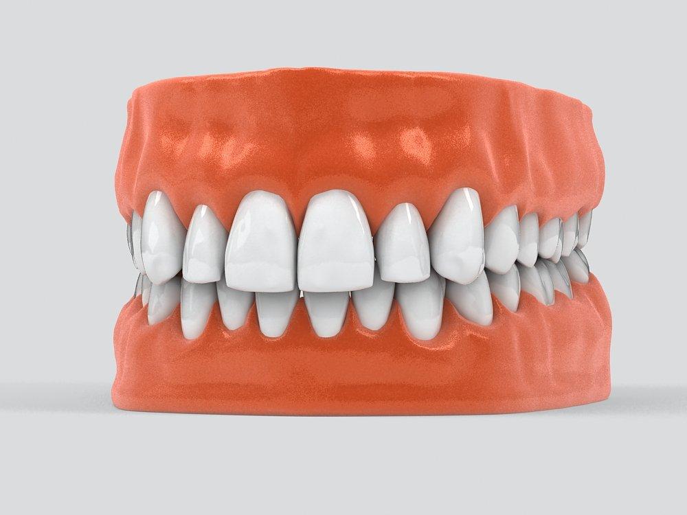 Human Teeth 3D Model in Anatomy 3DExport