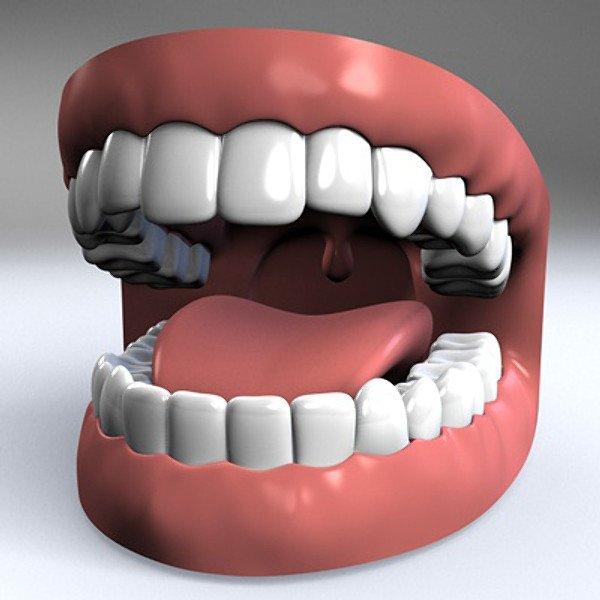 Mouth 3D Model in Anatomy 3DExport
