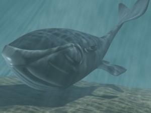 Toon whale 3D