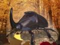 Rhinoceros Beetle RIGGED