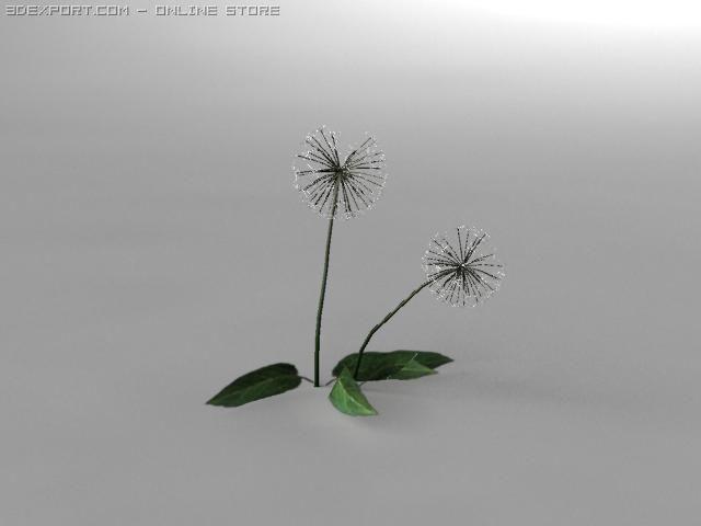 Dandelion 3d Model In Flowers 3dexport