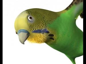 Bird Wing rig