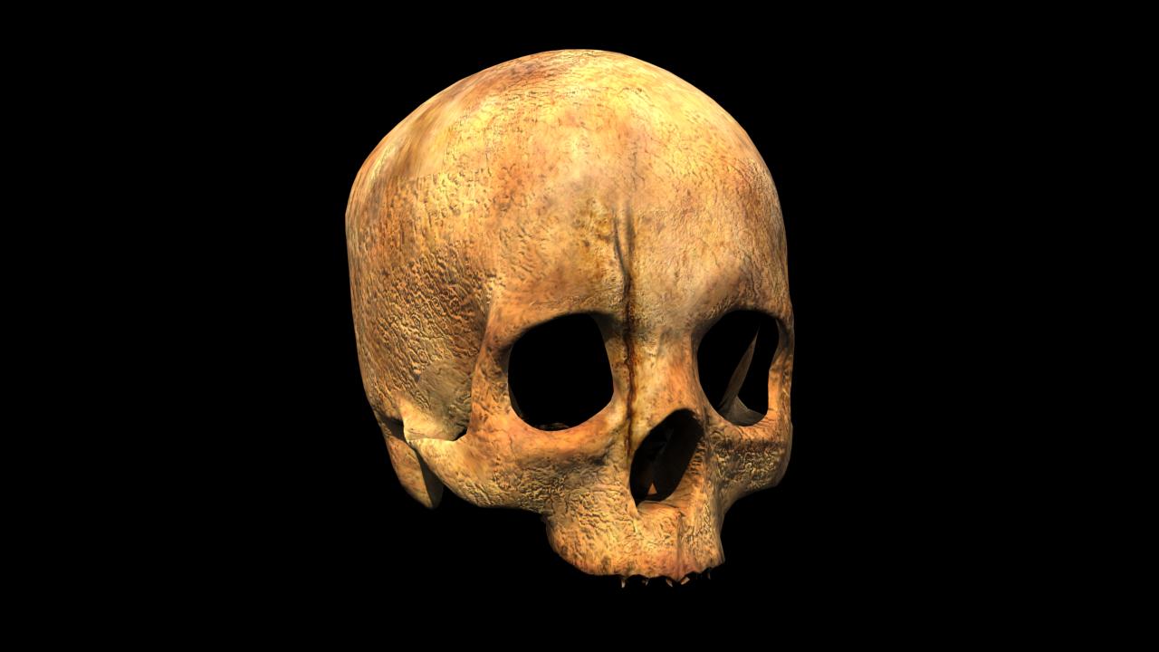 Human skull 3D Model in Anatomy 3DExport