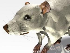 Jenni Mouse