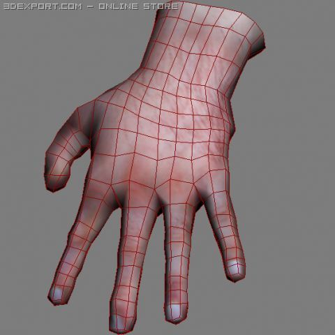 Hand Free 3D Model in Anatomy 3DExport