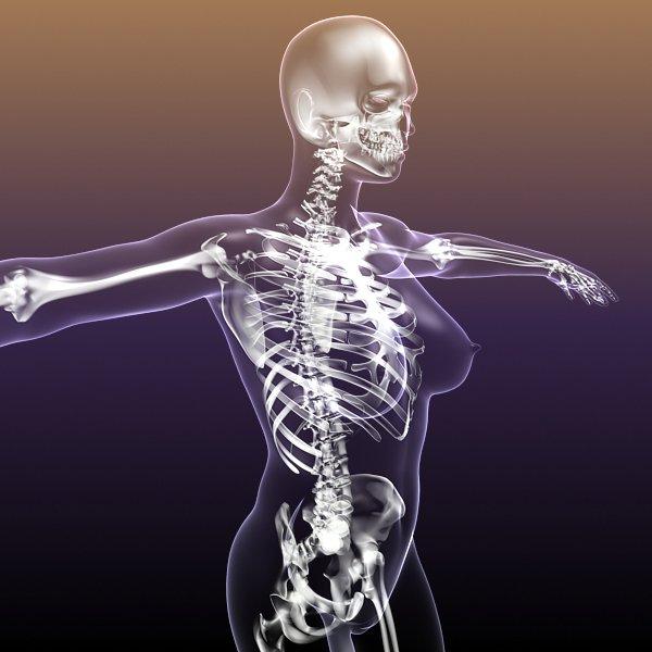 Skeleton Of Female In Woman Body Anatomy 3d Model In Anatomy 3dexport