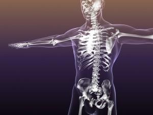Human Skeleton in Male Body