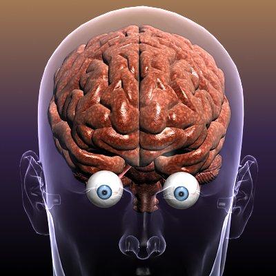 Brain with Eyes in a Human Head 3D Model in Anatomy 3DExport