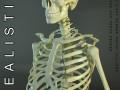 HD Human Skeleton