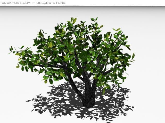 Cherry laurel 3D Model