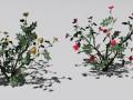 2 rose bush