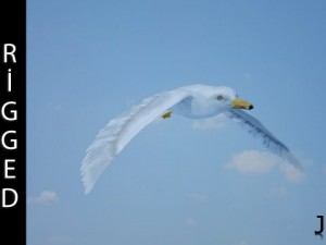 Seagull  Rigged  Animated  Loop