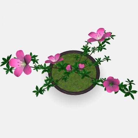 Japan azalea pot 3D Model