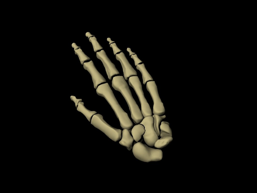 Skeletal Hand 3d Model In Anatomy 3dexport