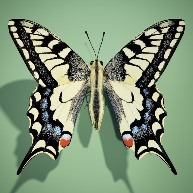 Butterflyswallowtail 3D Model