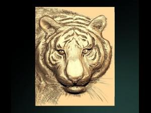Ussuri tiger bas