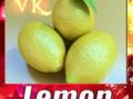 Lemon High Detail