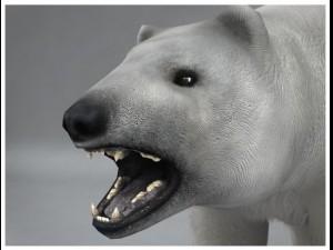 Polar White Bear rigged