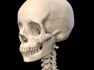 Anatomically Accurate Human Skull