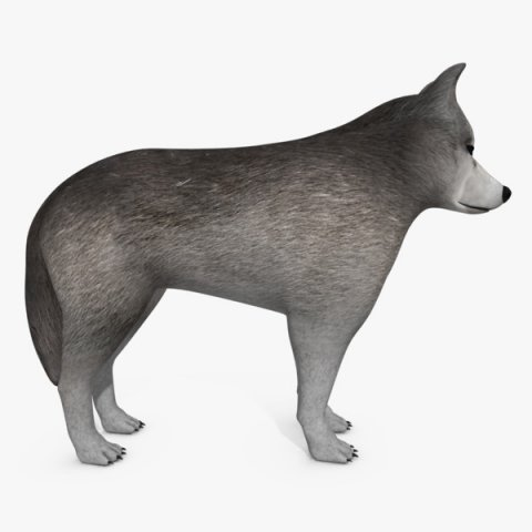 Wolf Or Dog 3D Model