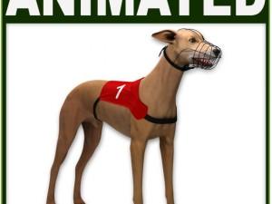Greyhound Dog CG