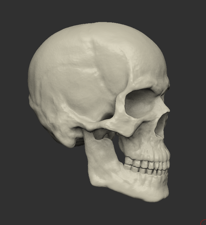 Male Human Head And Bonus Human Skull 3d Model In Anatomy 3dexport