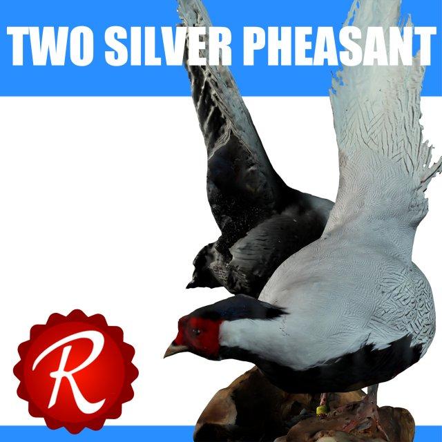 Two Silver Pheasants 3D Model