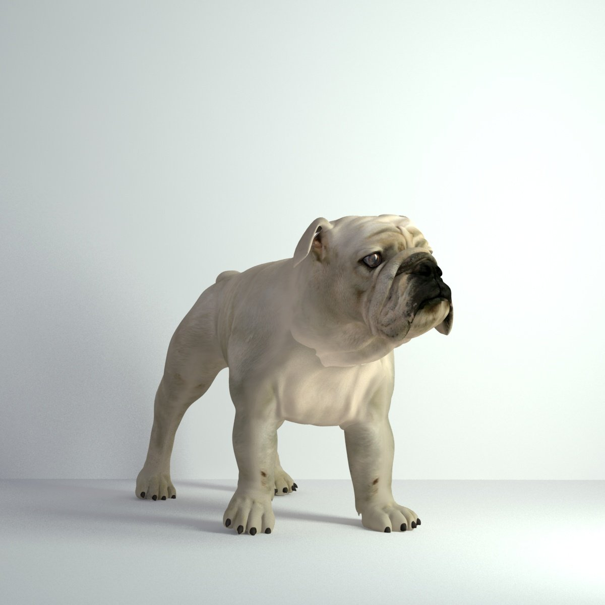 Bulldog 3D Model in Dog 3DExport