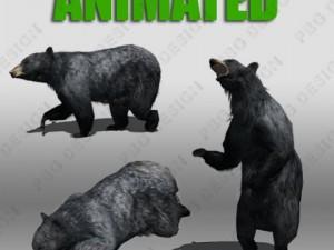 Black Bear Animated